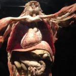 解剖実習コロラド